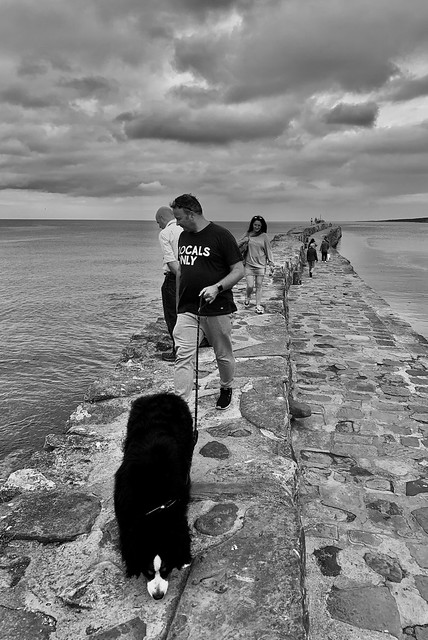 St Andrews harbour wall