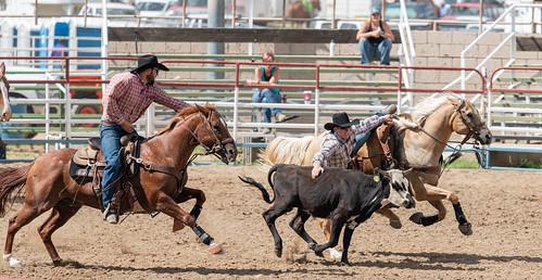 calf_wrestling-20210912-124