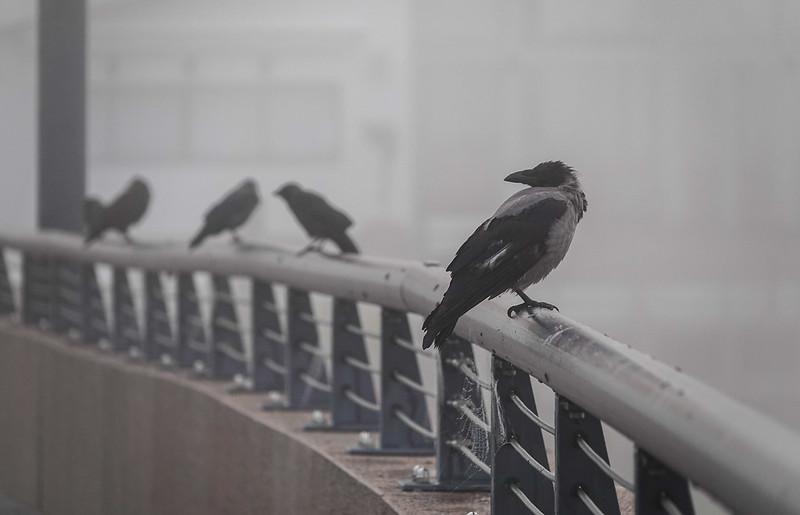 Fog birds