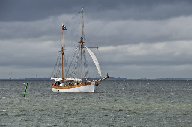 Old Wooden ships meets ones a year to sail a regatta around Limfjorden