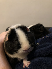 7th March 2018