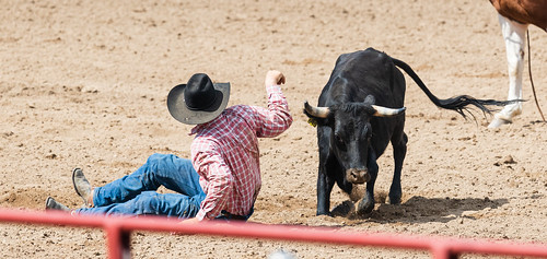 calf_wrestling-20210912-118