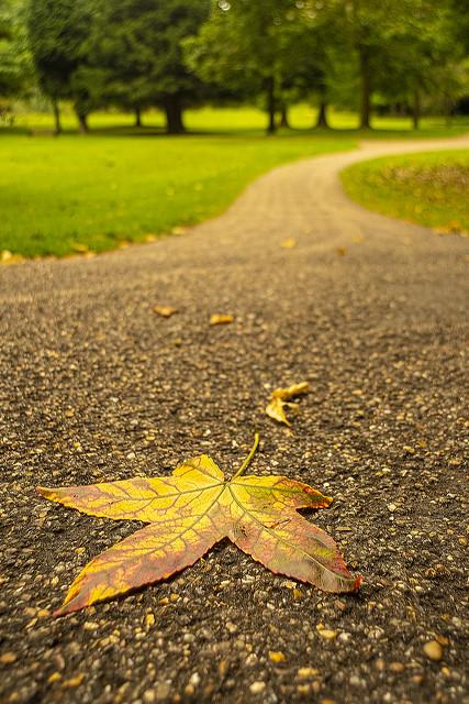 Pathway into the park and autumn CZJ FLEKTOGON 20mm f4.0