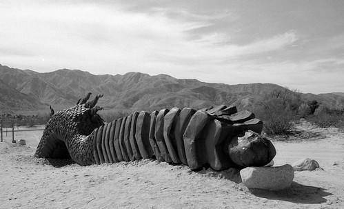 Sand Dragon's Tail at Galleta Meadows (3)