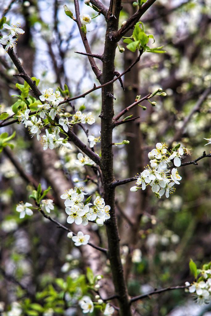 floressoftness