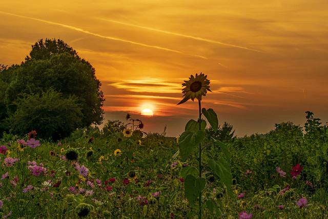 Sunset in Koningslo