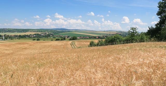 021Jun 27: Barley Fields at Holic
