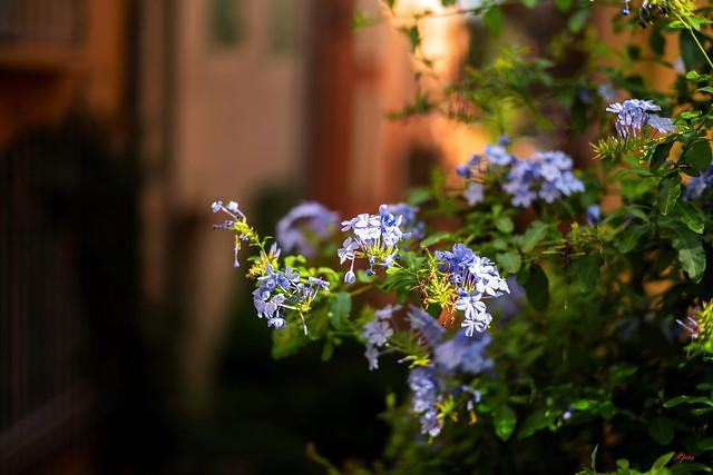 J'suis fleur bleue
