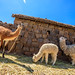 Puno Country Living (4)