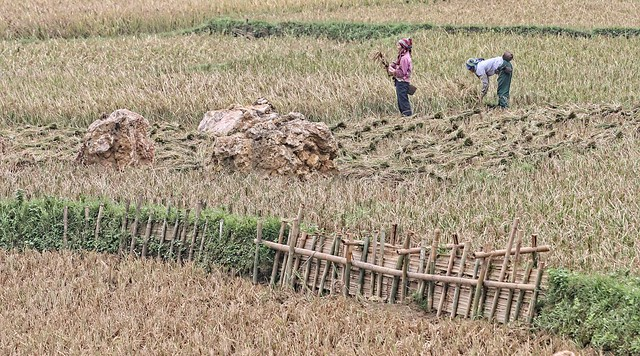 Vietnam - Hoa Binh area - rice fields