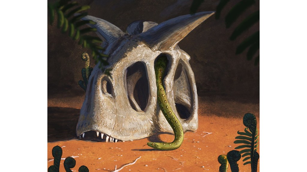 Snake crawling out of a dinosaur skull