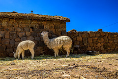 Puno Country Living (7)