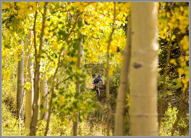 Mountain Biking Through Fall Aspens