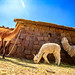 Puno Country Living (6)