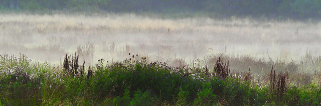 Seen from the edge of a mist shrouded meadow. (on explore)