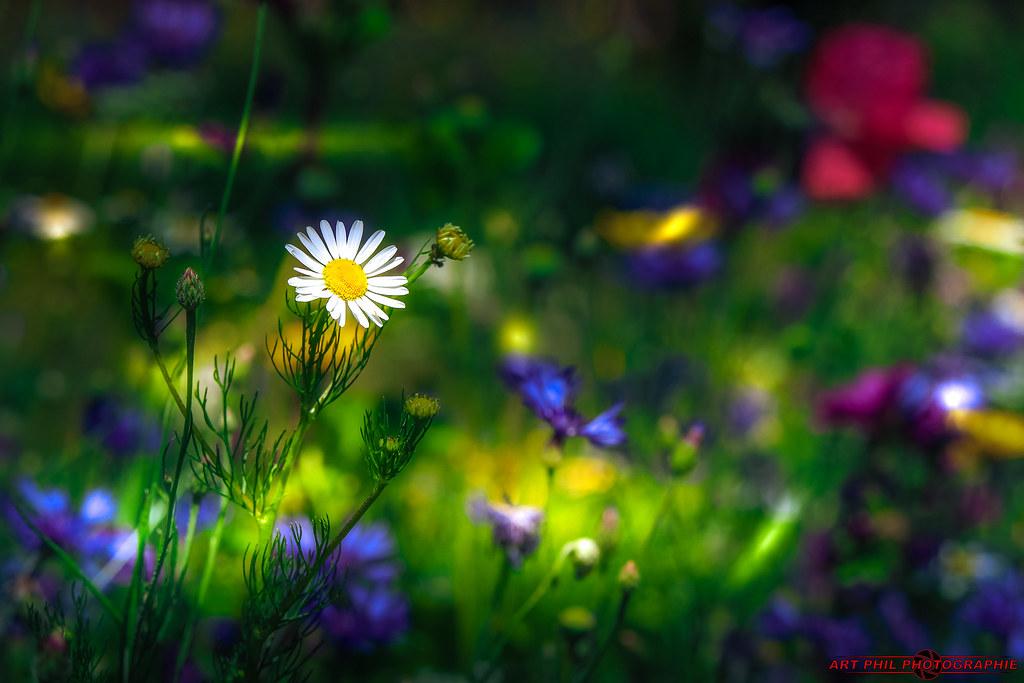 Fleurs et Pétales de Couleurs