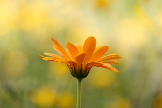 yellowly soft