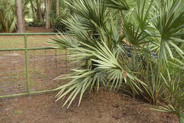 Palmetto by the Green Gate