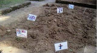La coltivazione delle patate è stata personalizzala e curata da tutti i bambini