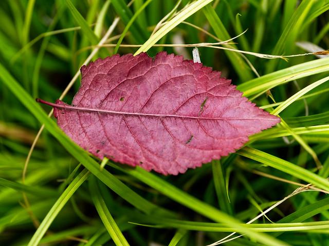 macro leaf 2_0009