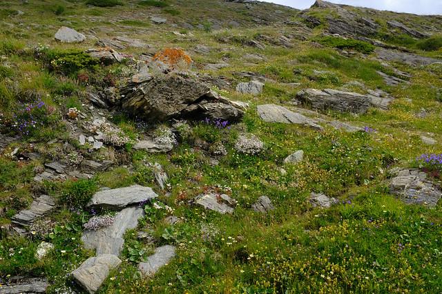 Last colorful alpine meadow