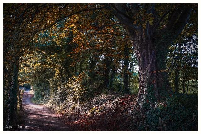 Friston Forest. E.sx