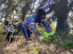 Volunteer pulls invasive plants