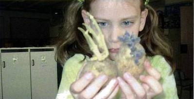 """Osservazione da """"laboratorio"""" della patata-campione lasciata al buio"""