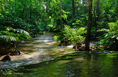 In to the wild - Doi Luang national park - North Thailand