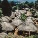 20040119-village nr Mt Mulanje 3.jpg