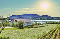 Vyzkoušejte krásné běžecké trasy jižní Moravy a na jihu Čech
