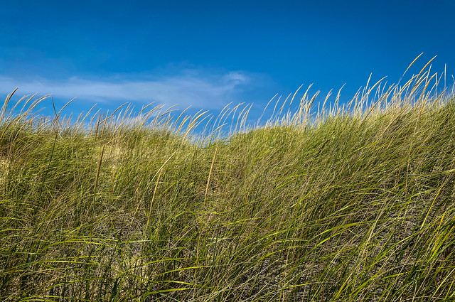 Beach Grass - Explore