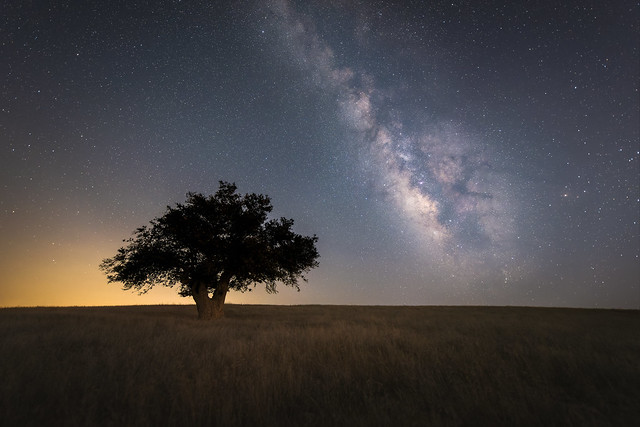 Lonely Tree Under the Stars