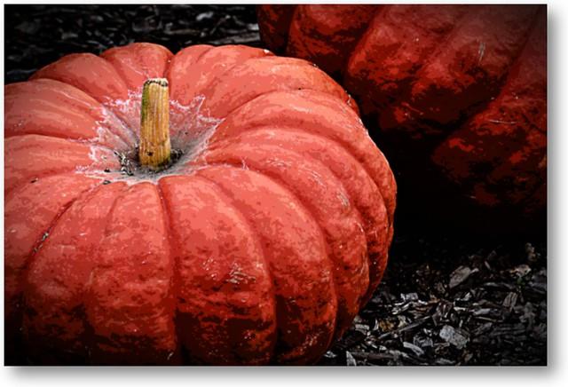 go get your Pumpkin:-)