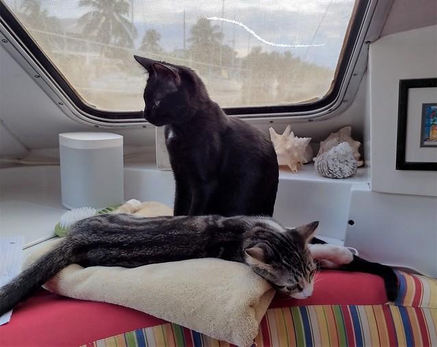 Boat kitties