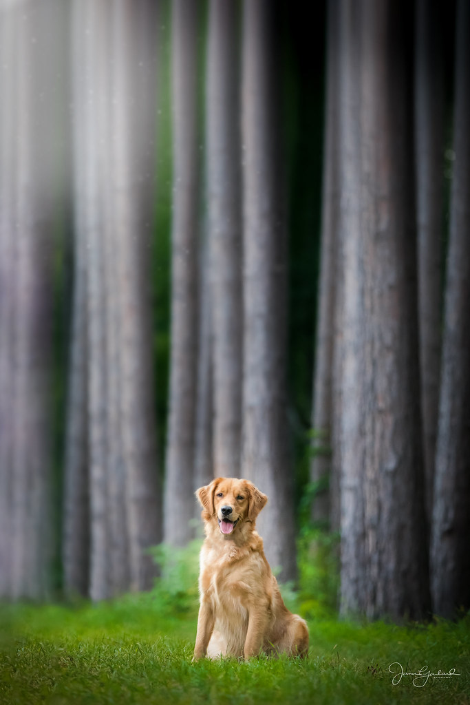Maggie in the Tall Trees - Sept. 12th '21