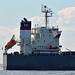 BULK CARRIER SHIP 4
