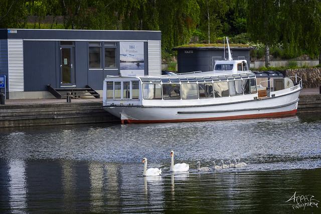 Swan Parade, Silkeborg Harbour 2020