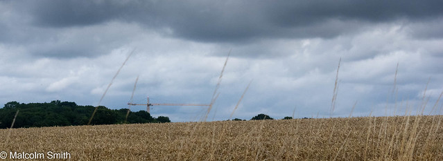 The Crane Across The Field
