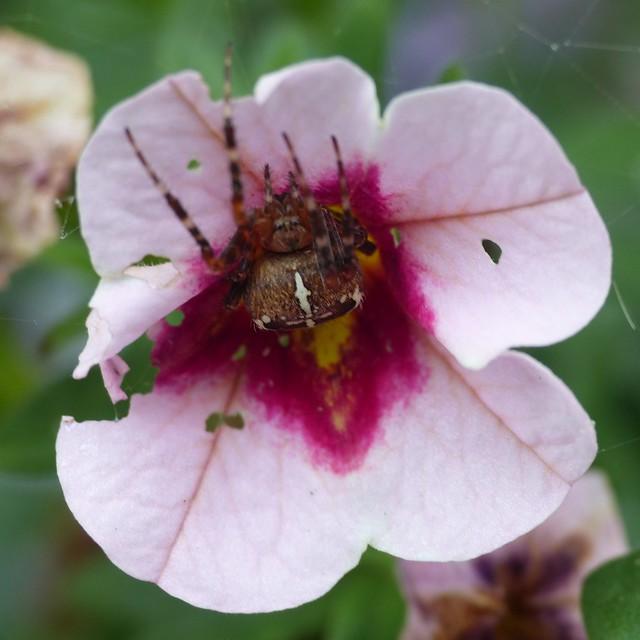 Flower Dweller