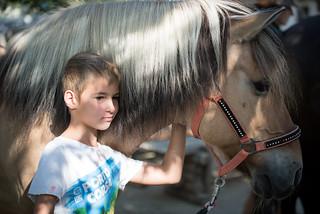 Mein Lieblingspferd... Niki