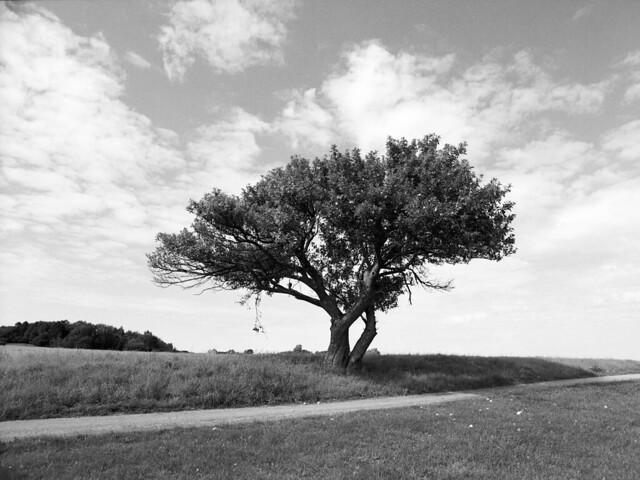 Solitært træ, Donsevej
