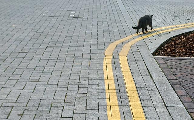 Skimbleshanks the railway cat
