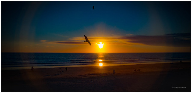 Vuelo de gaviotas al atardecer // Seagulls flight at sunset