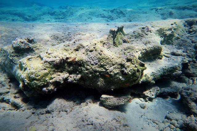 Τμήμα μινωικού πίθου συσσωματωμένο στο πέτρωμα του βυθού του κόλπου Κουρεμένου