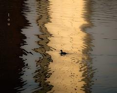 Nadando entre reflejos