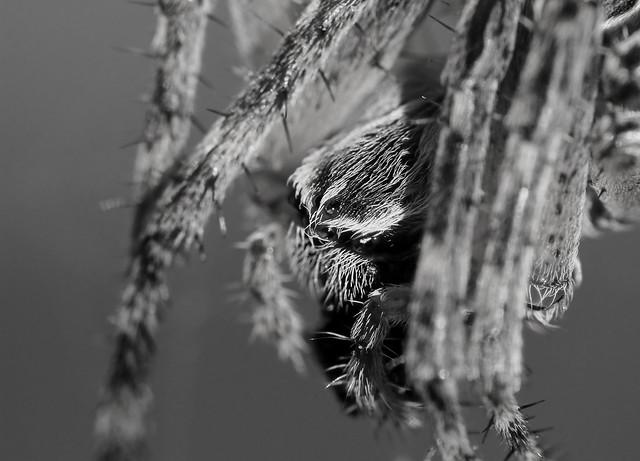 Portraiture Arachnia