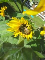 Bug on the sun