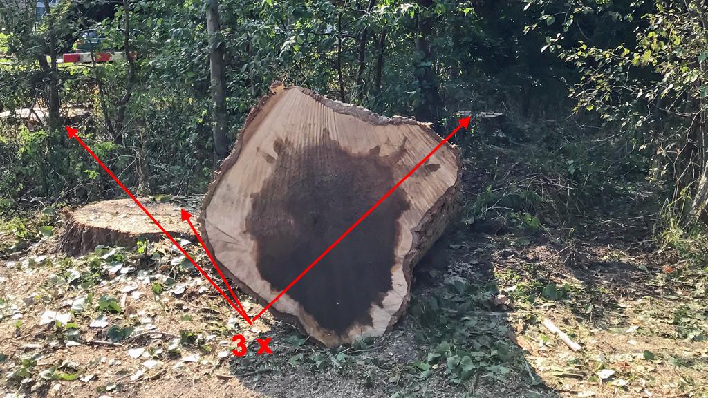 Boomvalk-bomen
