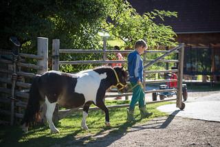 Kathrien auf Ponywanderung